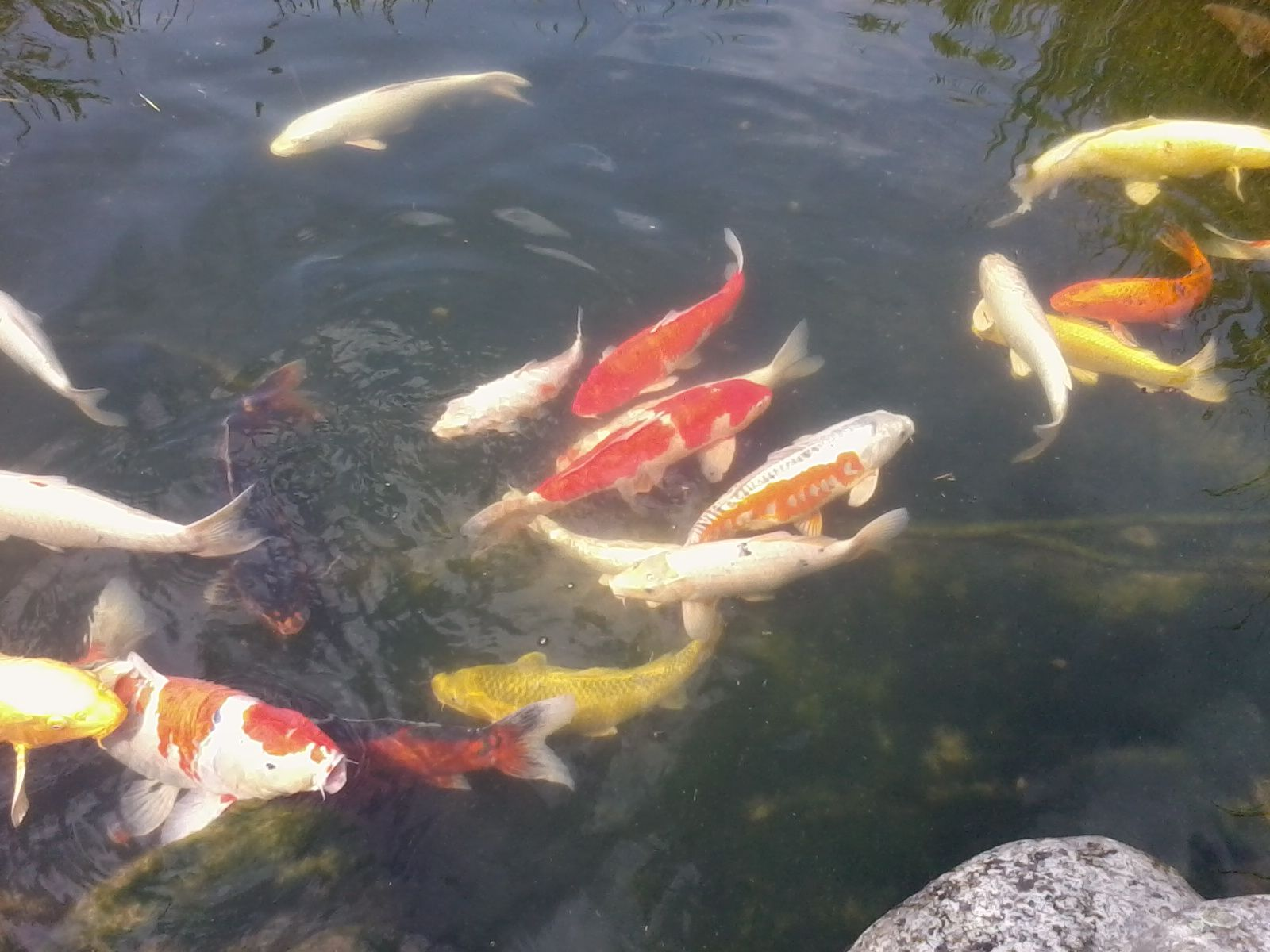 Les jardins aquatiques - Les jardins aquatiques saint didier sur chalaronne ...